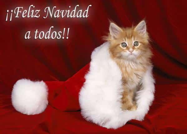 navidad gatito noel 231215