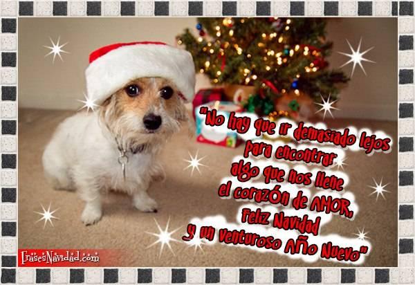 perrito gorro navidad