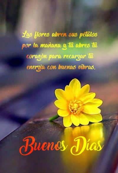 saludos de buenos dias con flores