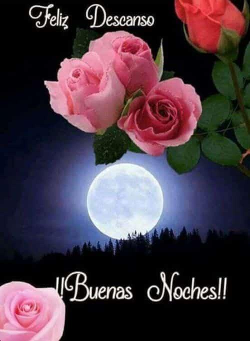 buenas noches flores
