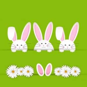 easter bunny background with daisies 1048 5316