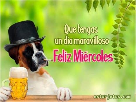 miercoles perro cerveza